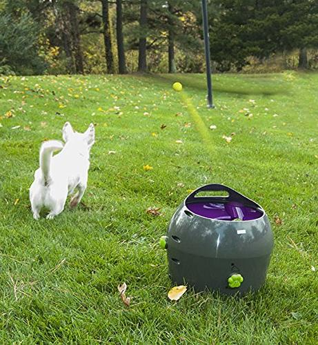 PetSafe Automatic Dog Toy, Throwing for Dogs in Easy-Open